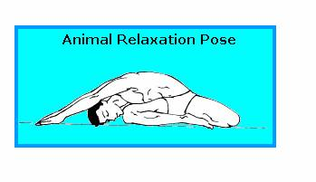 ANIMAL RELAXATION POSTURE